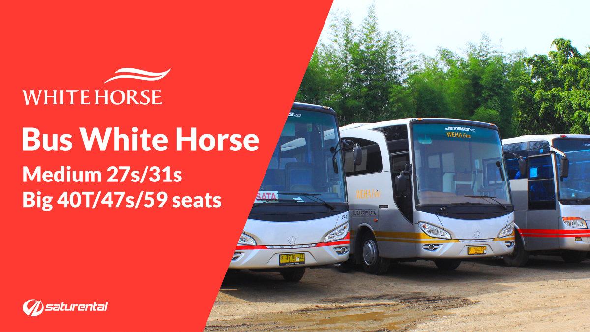 saturental - foto bus pariwisata white horse big bus