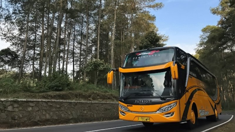saturental - foto big bus pariwisata patriot shd hdd premium terbaru 52 seat d