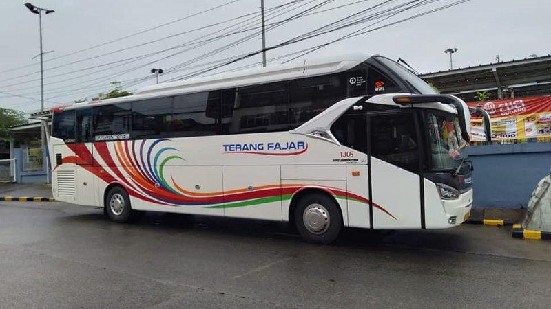saturental - foto big bus pariwisata terang fajar shd hdd terbaru 45t 59 seats a