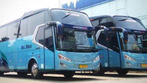 Sewa Bus Pariwisata Big Bird